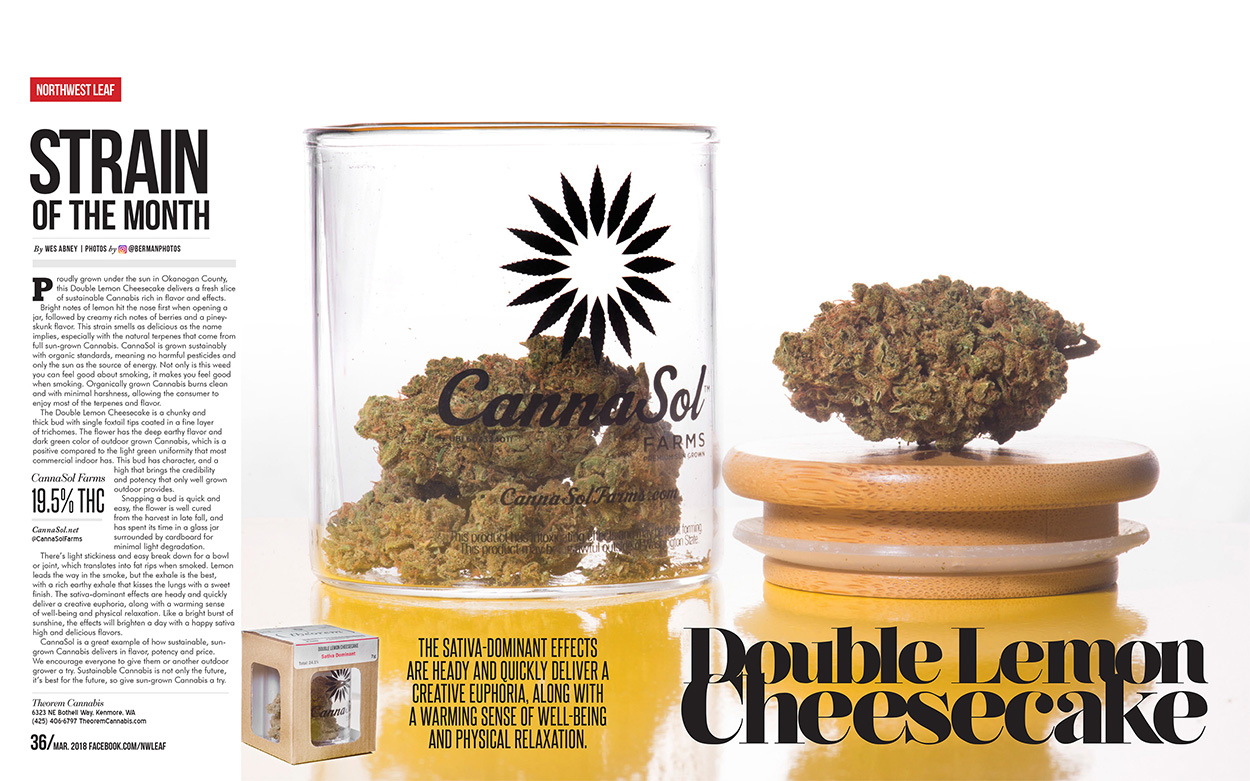 CannaSol DLCC Double Lemon Cheesecake